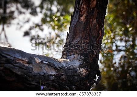 Tree bark #657876337