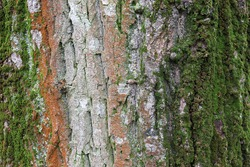 tree bark green moss background texture
