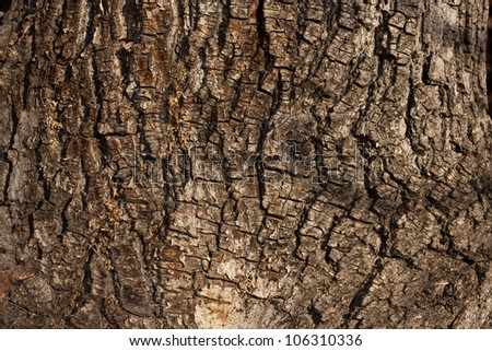 tree bark in the background