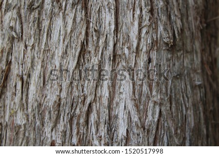 tree bark taupe, natural background #1520517998