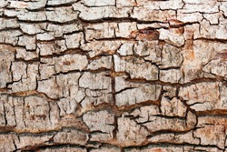 Tree bark texture background.