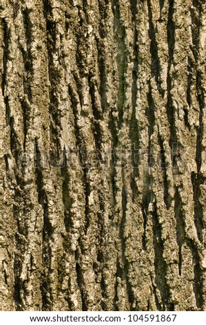 Tree bark texture background seamlessly tileable