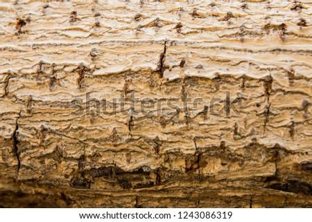 tree bark texture background vintage look #1243086319