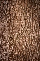 Tree bark texture full frame in nature
