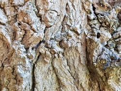 Tree bark texture. Old grunge wood texture use for background with color toned.