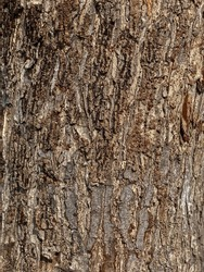 Tree bark texture suface rough natural closed up