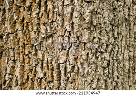 Tree bark with brown color on the left and grey on the right side