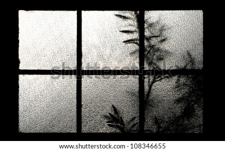 tree behind a window Texture of frosted glass