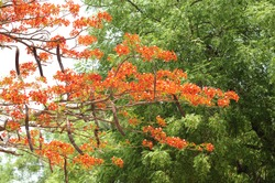 tree blossom or tree flowering, growth and sprout in nature