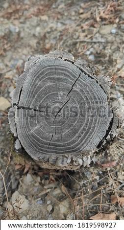 Tree body view after cut down Stok fotoğraf ©