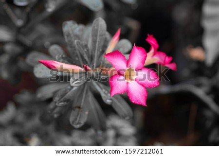 tree botany bright beauty blooming leaf green colorful color closeup summer petal flora natural floral blossom garden bloom pink beautiful spring background plant flower nature