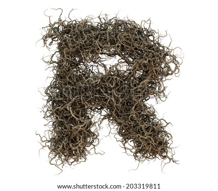 tree branch alphabet set 2 Photo stock ©