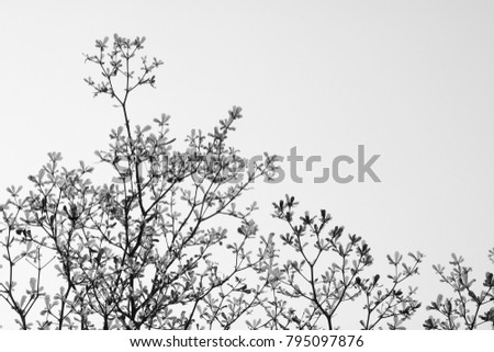 tree branch and leaf - monochrome background