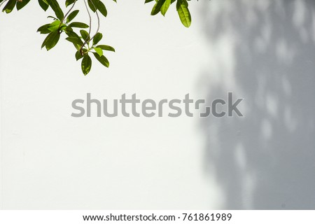tree branch and leaf with shadow on a white concrete wall