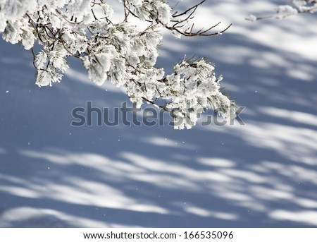 Tree branch full of falling snow in a winter decor