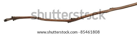 Tree branch in front of white background