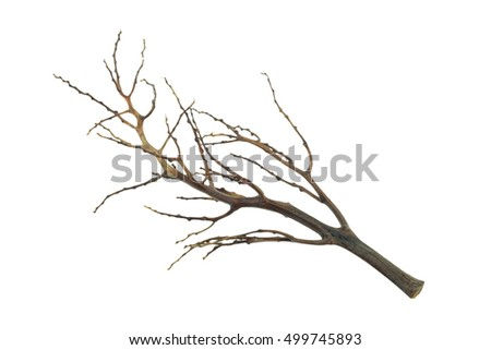 Tree branch isolated, dead branch isolated #499745893