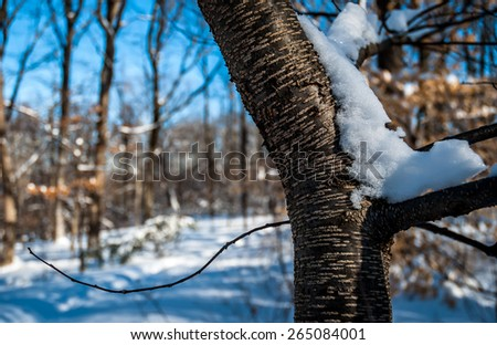Tree branch isolated in the forest wilderness forming a new beginning. Tree forest background in snow setting. Snow on tree branch, bright blue sky, morning sky, morning sun.
