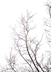 tree branch on a white background