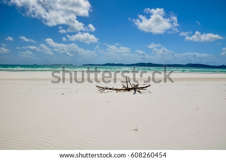 Tree branch on Whitehaven Beach, Whitsunday Island, Great Barrier Reef, Queensland, Australia. Popular tourist destination is known for its pure white sands. Accessible from Airlie Beach.