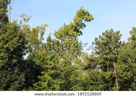 Tree branch shaped like a T-Rex dinosaur  Stock fotó ©