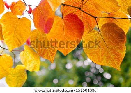 Tree branch with autumn leaves. Autumn background. stock photo