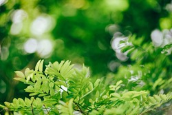 Tree branch with green leaves and bokeh background. Calm spring time harmony.