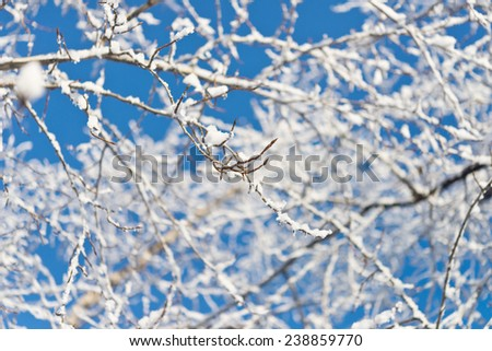 tree branch with snow against sky #238859770