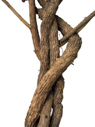 Tree branch with white ground