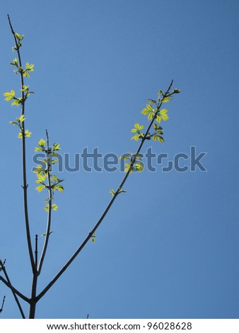 Tree branch with young leaves on blue background