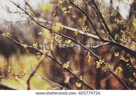 tree branches #605774726