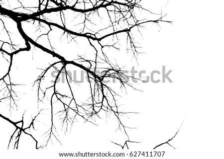 Tree branches abstract background