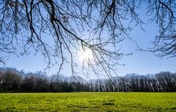 Tree branches against the bright sun. Tree branches on bright sun. Branches on sun light