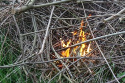 Tree branches are burning with a small fire, a tourist theme. Protect nature do not leave a fire.