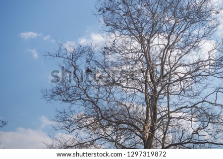 Tree branches background Dry branches #1297319872