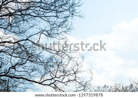 Tree branches background Dry branches #1297319878