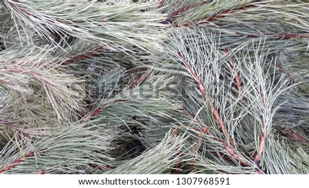 Tree branches. Background of pine branches #1307968591