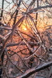 tree branches covered with ice during dawn in winter