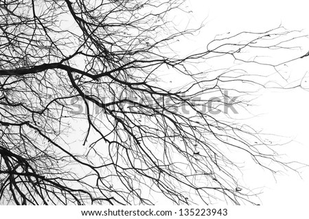 tree branches isolated on the white background #135223943