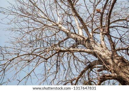 Tree branches on dense branches #1317647831