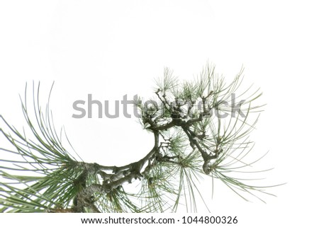 Tree branches on white branches, natural background #1044800326