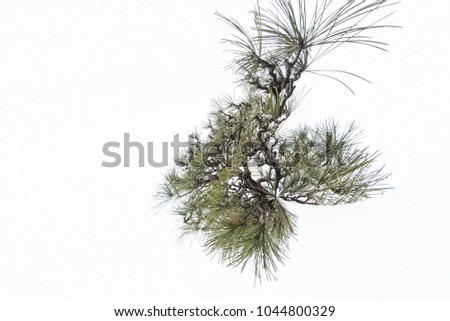 Tree branches on white branches, natural background #1044800329