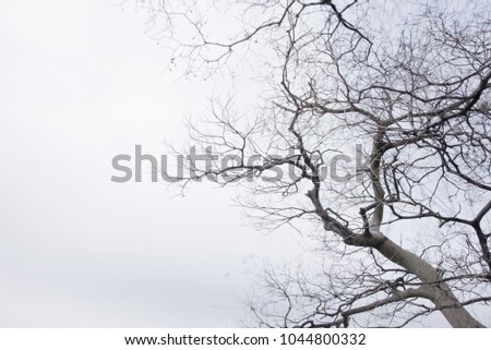 Tree branches on white branches, natural background #1044800332