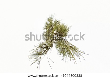 Tree branches on white branches, natural background #1044800338