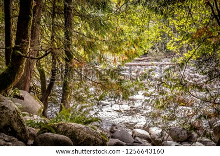Tree branches with autumn color leaves hanging low, and water flowing over rocks along a river stream through a mountain in North Vancouver, Canada #1256643160