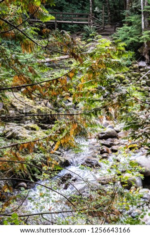 Tree branches with autumn color leaves hanging low, and water flowing over rocks along a river stream through a mountain in North Vancouver, Canada #1256643166