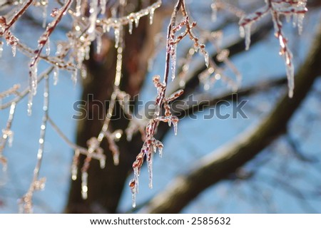 Tree Branches with Dripping Icicles