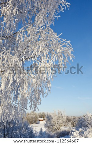 Tree branches with frost in winter landscape