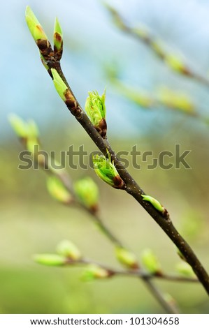 Tree branches with new leaves