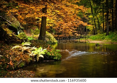 tree by the water in the fall - stock photo